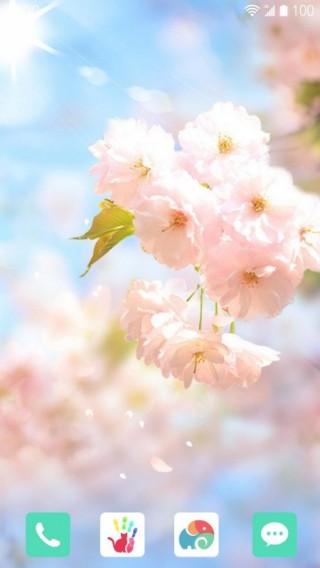 樱花落-梦象动态壁纸截图(2)
