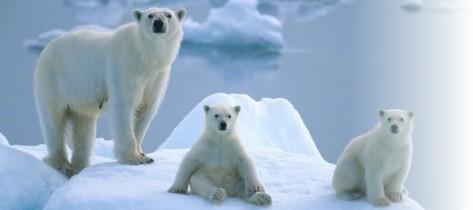北极熊游戏